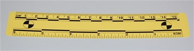 Photo Evidence Scale - Yellow 150mm/6""